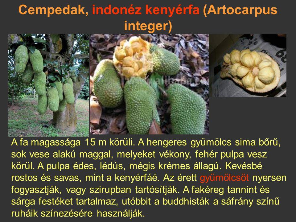 Cempedak, indonéz kenyérfa (Artocarpus integer)