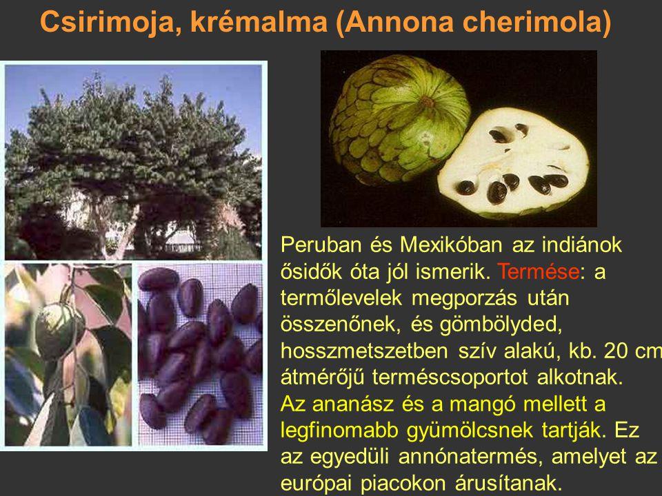 Csirimoja, krémalma (Annona cherimola)