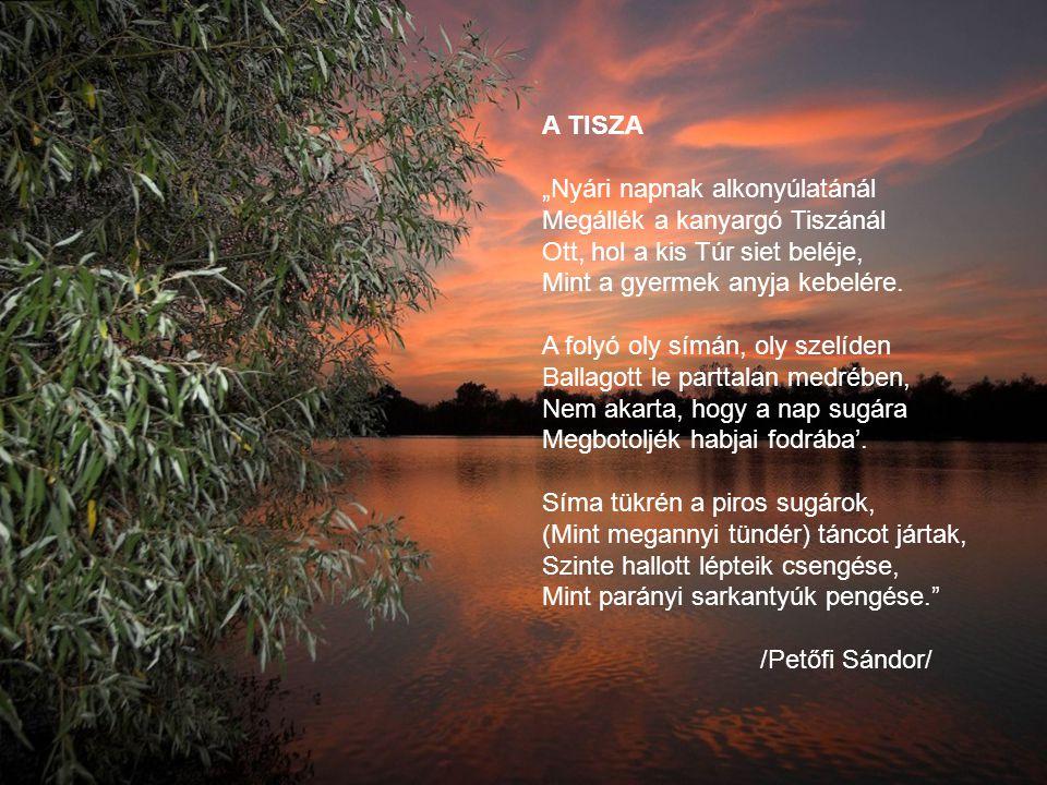 """A TISZA """"Nyári napnak alkonyúlatánál Megállék a kanyargó Tiszánál Ott, hol a kis Túr siet beléje, Mint a gyermek anyja kebelére."""