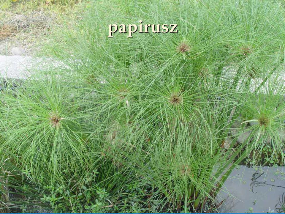 papirusz 04:38