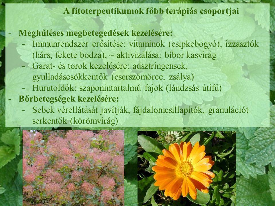 A fitoterpeutikumok főbb terápiás csoportjai