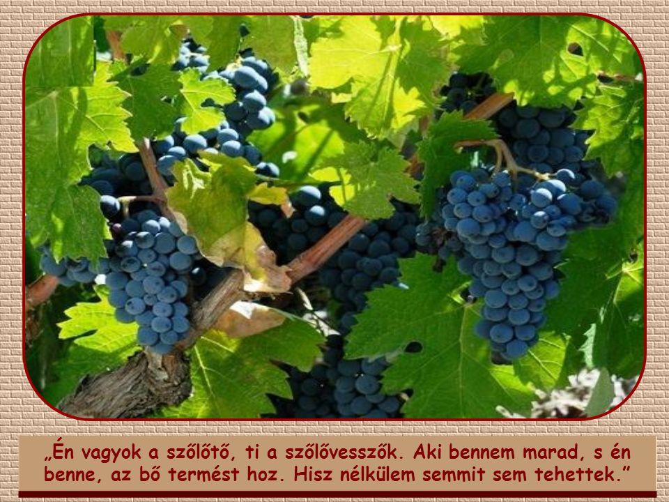 """""""Én vagyok a szőlőtő, ti a szőlővesszők"""