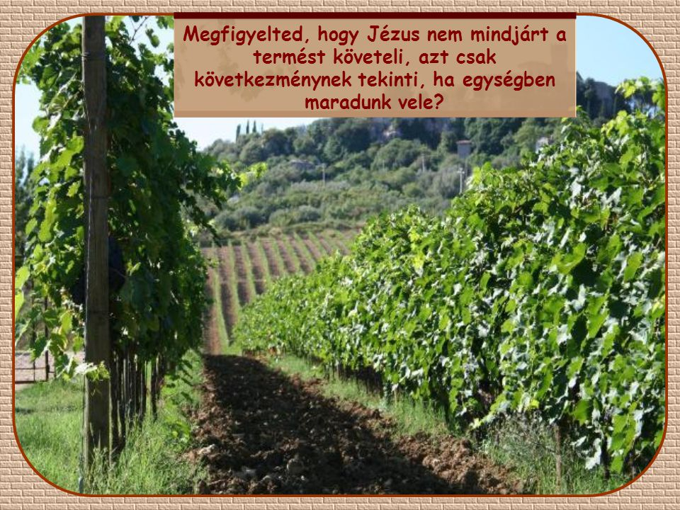 Megfigyelted, hogy Jézus nem mindjárt a termést követeli, azt csak következménynek tekinti, ha egységben maradunk vele