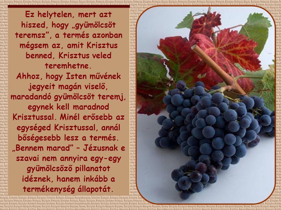 """Ez helytelen, mert azt hiszed, hogy """"gyümölcsöt teremsz , a termés azonban mégsem az, amit Krisztus benned, Krisztus veled teremhetne."""