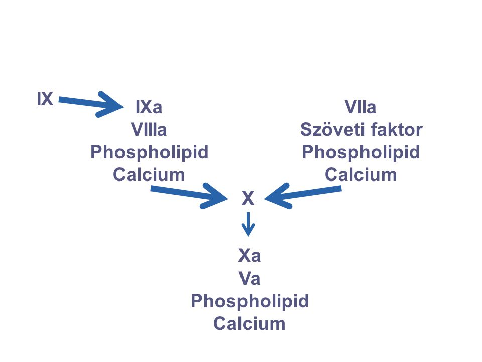 X IX IXa VIIIa Phospholipid Calcium VIIa Szöveti faktor Phospholipid