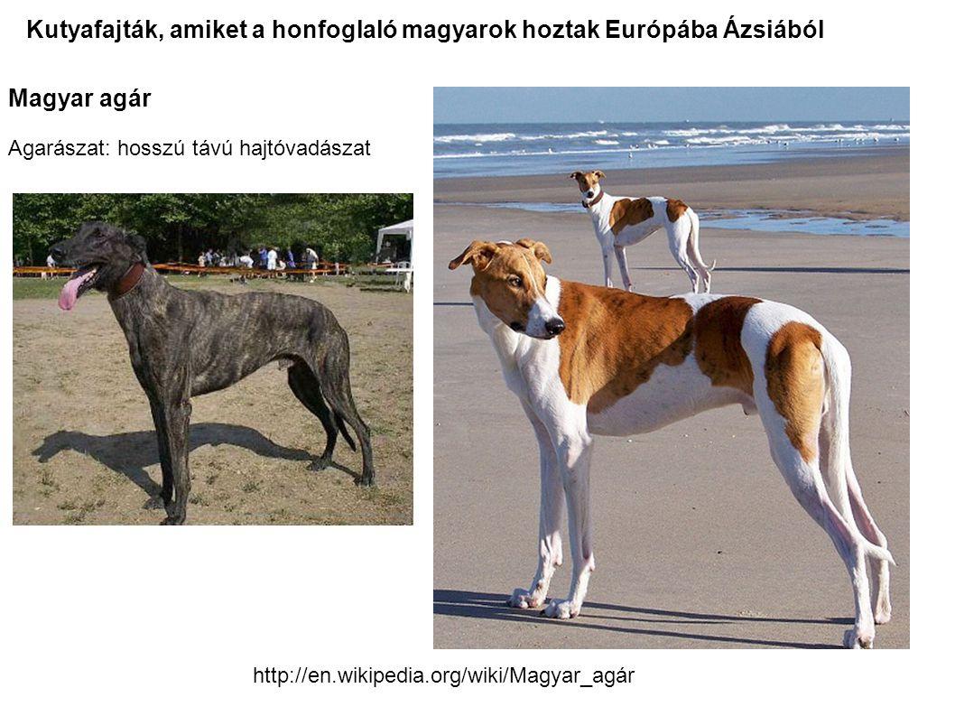 Kutyafajták, amiket a honfoglaló magyarok hoztak Európába Ázsiából