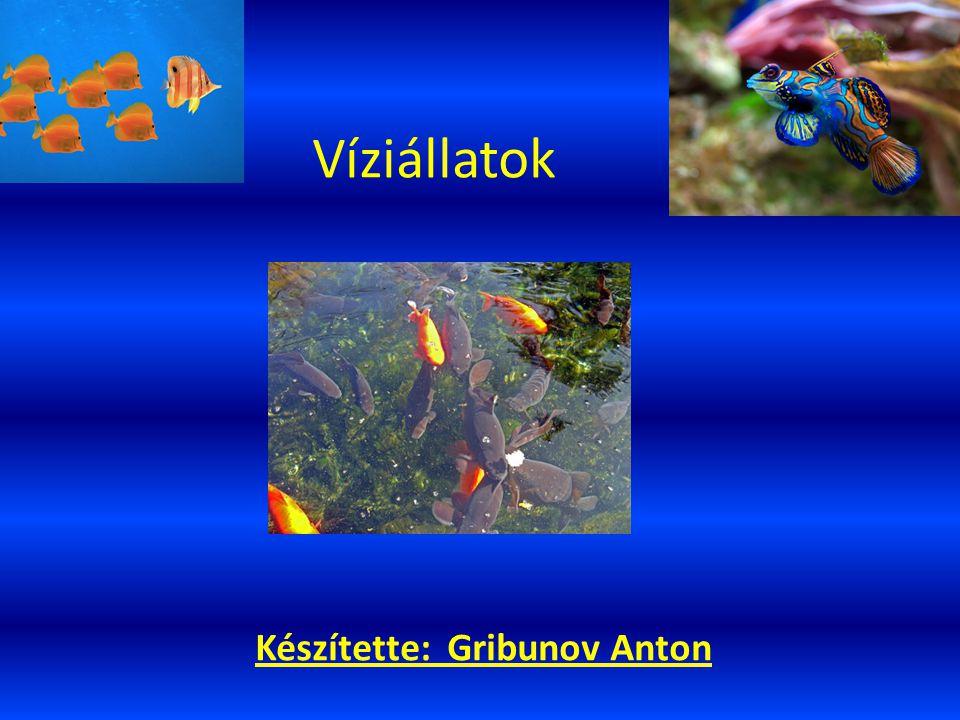 Készítette: Gribunov Anton