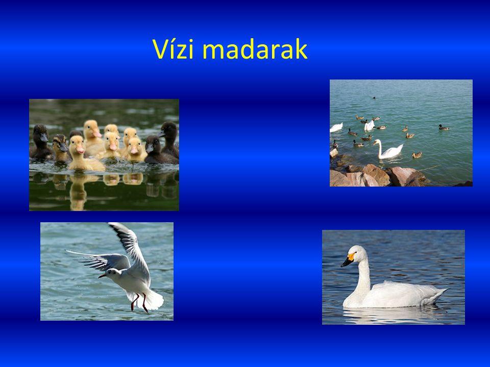 Vízi madarak