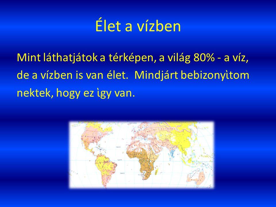 Élet a vízben Mint láthatjátok a térképen, a világ 80% - a víz, de a vízben is van élet.