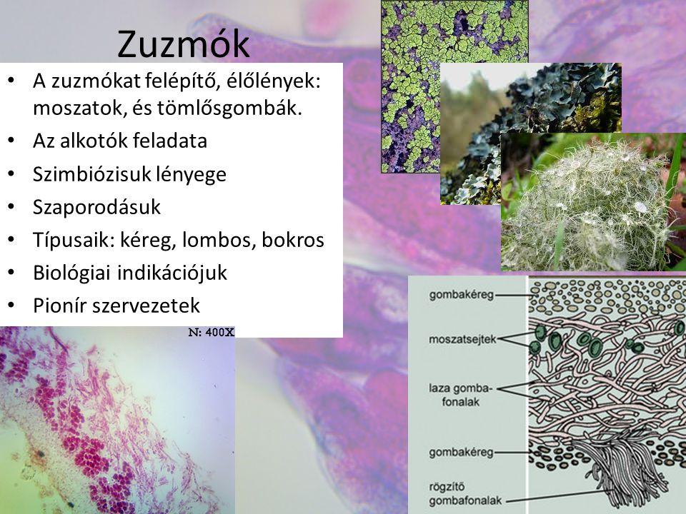 Zuzmók A zuzmókat felépítő, élőlények: moszatok, és tömlősgombák.