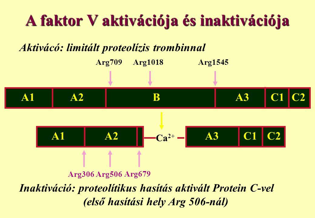 A faktor V aktivációja és inaktivációja