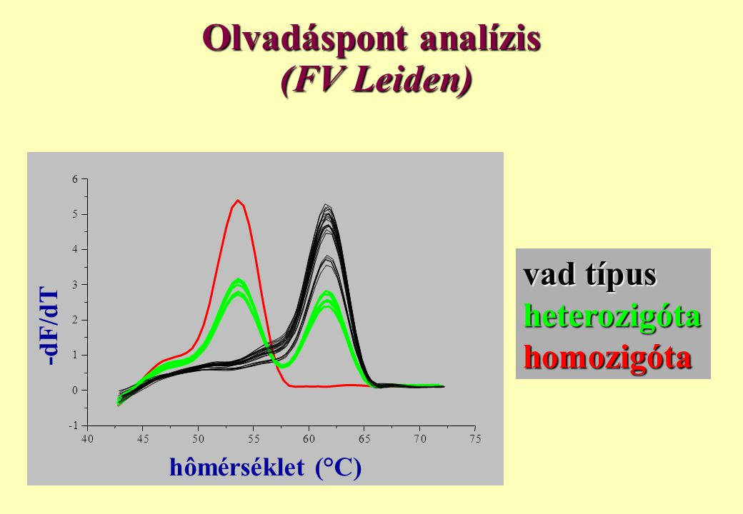 Olvadáspont analízis (FV Leiden)