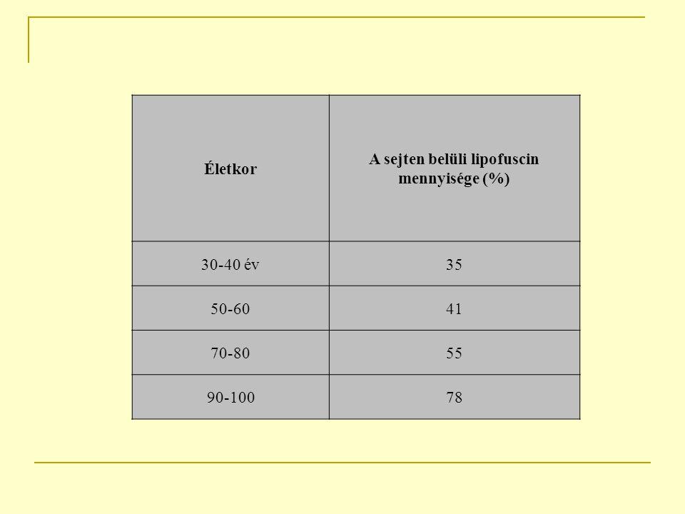 A sejten belüli lipofuscin mennyisége (%)