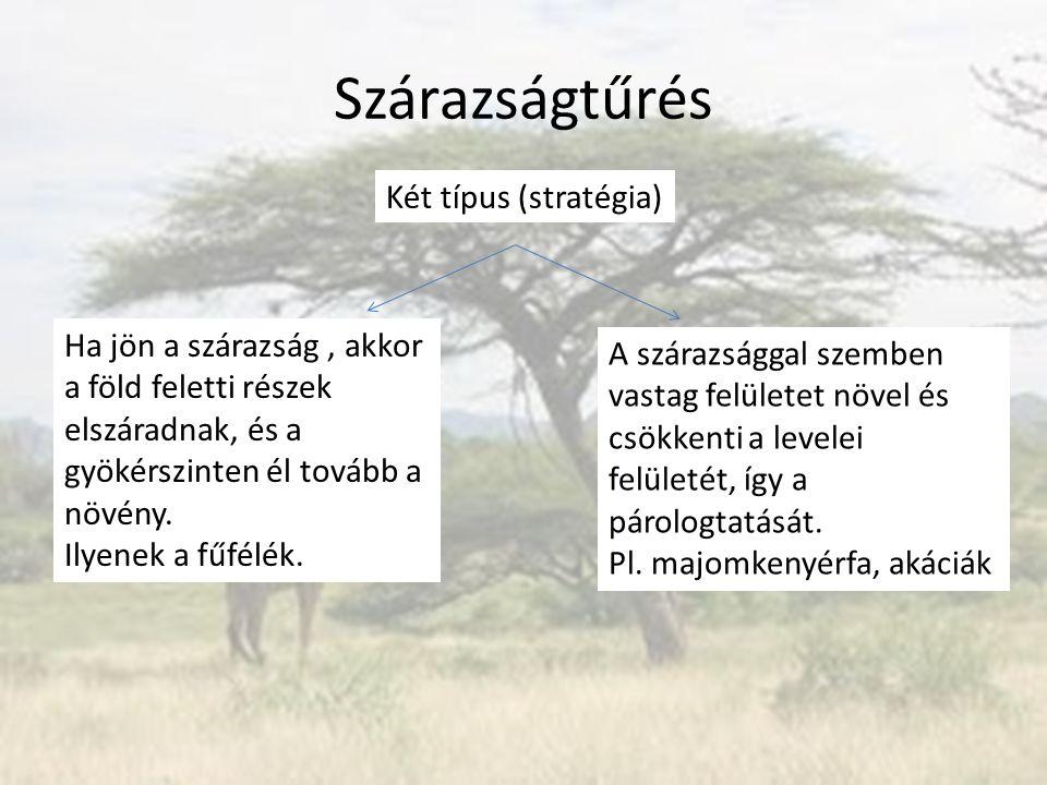 Szárazságtűrés Két típus (stratégia)
