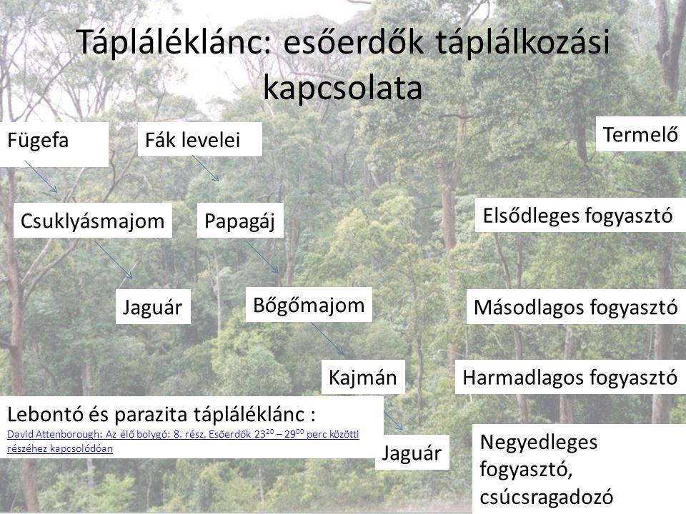 Tápláléklánc: esőerdők táplálkozási kapcsolata