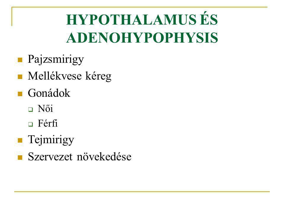 HYPOTHALAMUS ÉS ADENOHYPOPHYSIS