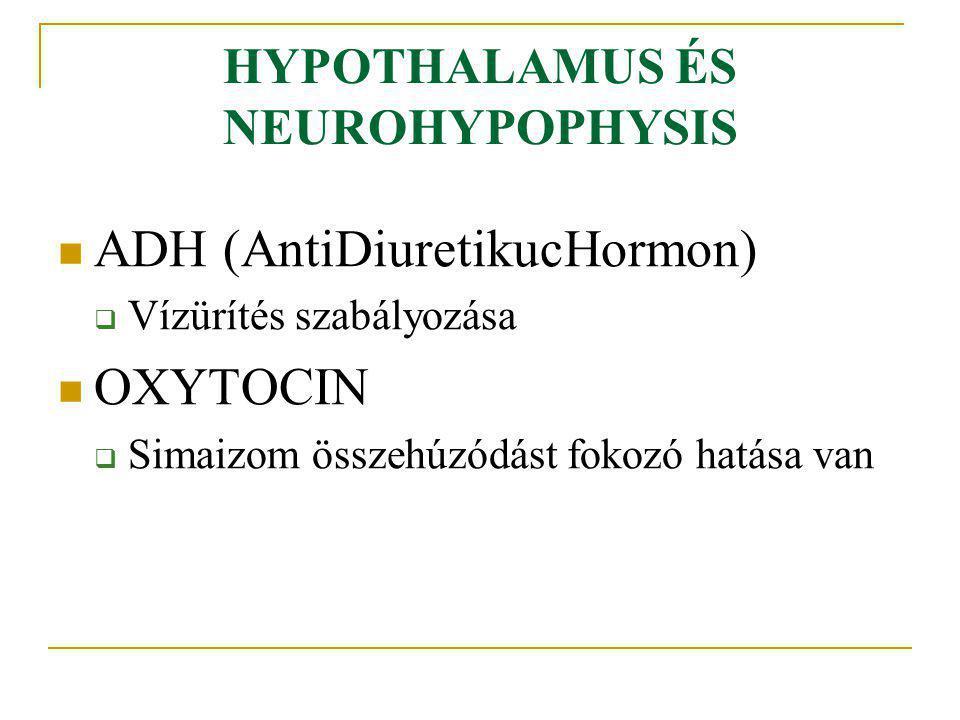 HYPOTHALAMUS ÉS NEUROHYPOPHYSIS