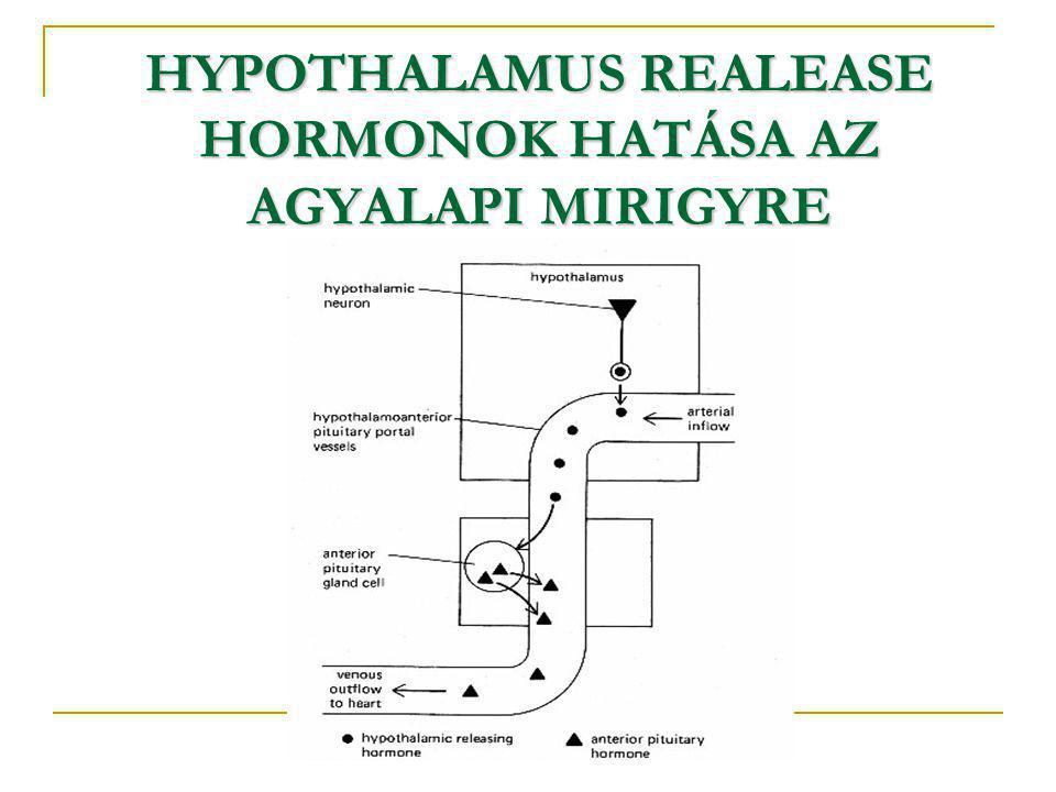 HYPOTHALAMUS REALEASE HORMONOK HATÁSA AZ AGYALAPI MIRIGYRE