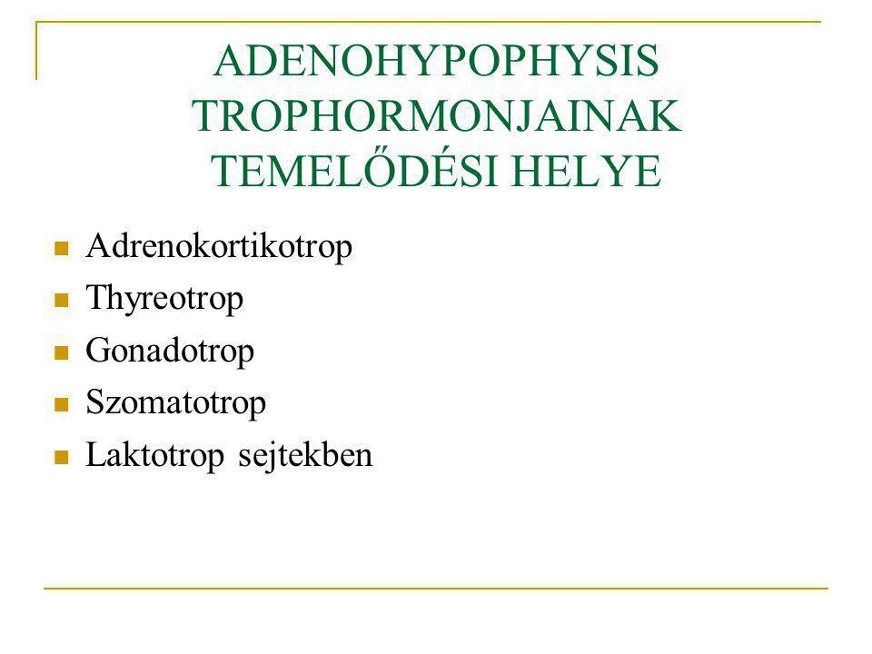 ADENOHYPOPHYSIS TROPHORMONJAINAK TEMELŐDÉSI HELYE