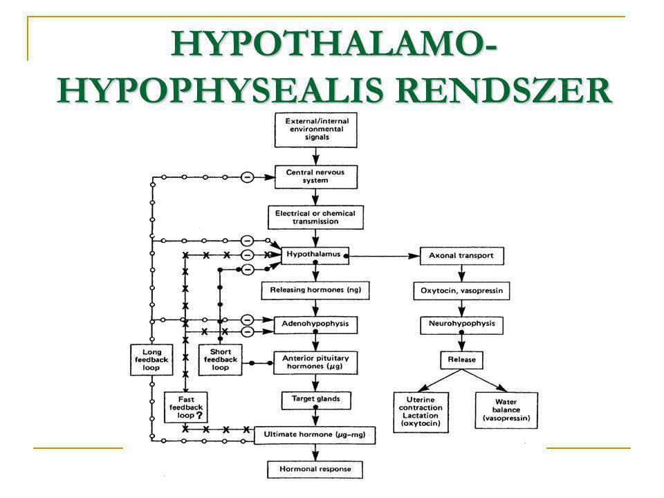 HYPOTHALAMO-HYPOPHYSEALIS RENDSZER