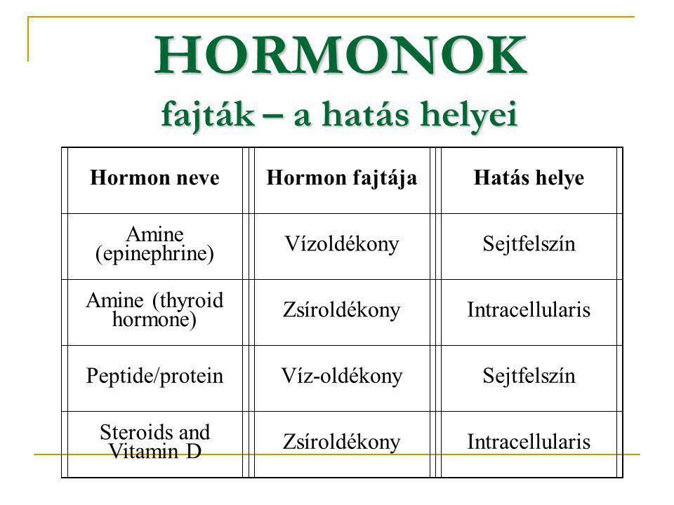 HORMONOK fajták – a hatás helyei