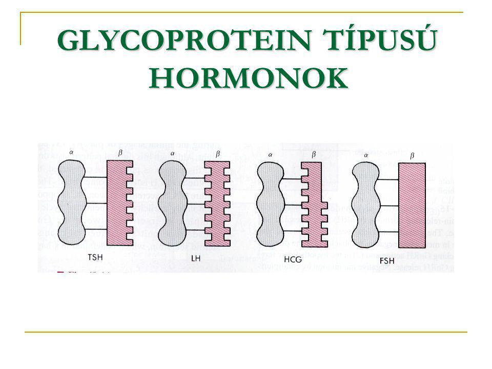 GLYCOPROTEIN TÍPUSÚ HORMONOK