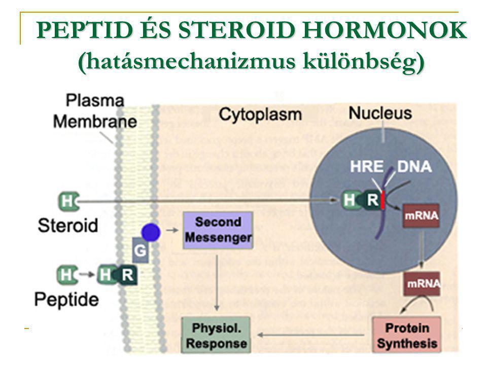 PEPTID ÉS STEROID HORMONOK (hatásmechanizmus különbség)