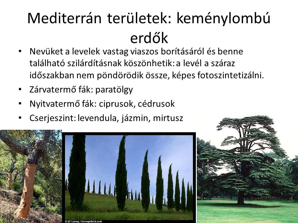 Mediterrán területek: keménylombú erdők