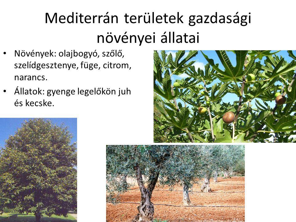 Mediterrán területek gazdasági növényei állatai