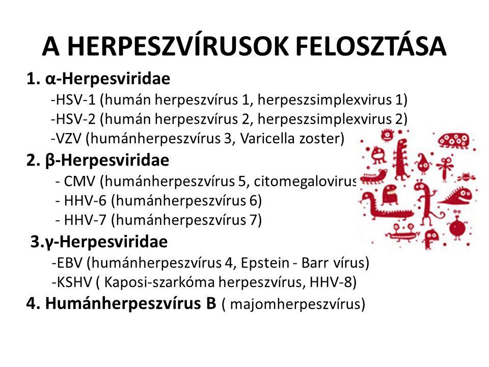 A HERPESZVÍRUSOK FELOSZTÁSA
