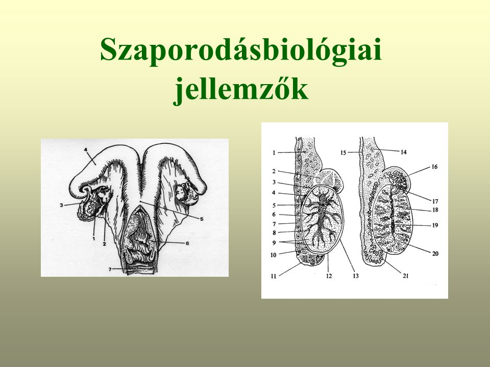 Szaporodásbiológiai jellemzők