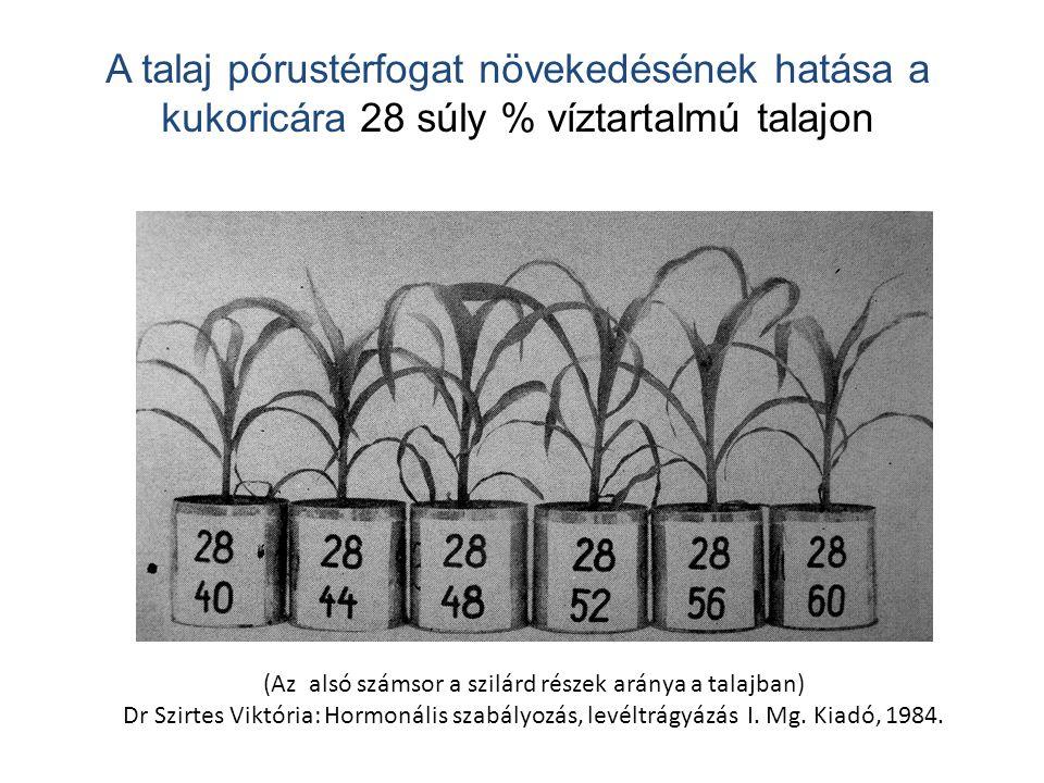 (Az alsó számsor a szilárd részek aránya a talajban)