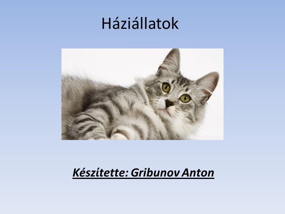 Készίtette: Gribunov Anton