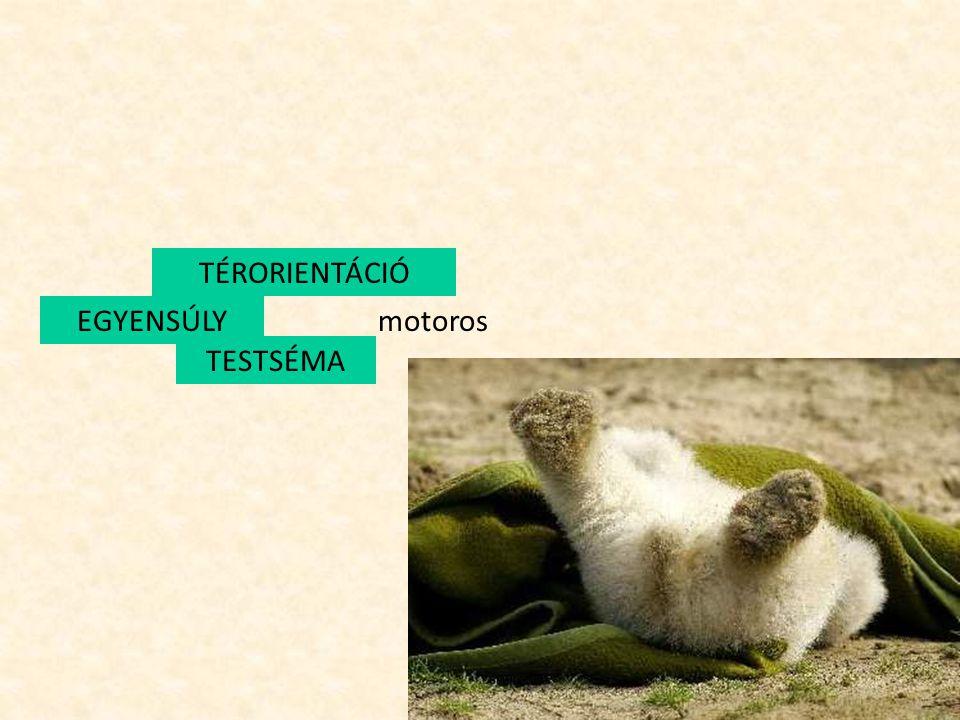 TÉRORIENTÁCIÓ EGYENSÚLY motoros TESTSÉMA