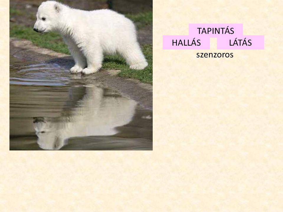 TAPINTÁS HALLÁS LÁTÁS szenzoros