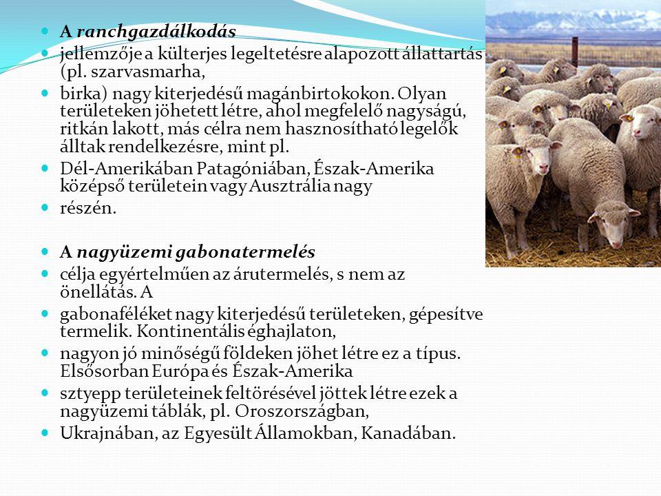 A ranchgazdálkodás jellemzője a külterjes legeltetésre alapozott állattartás (pl. szarvasmarha,