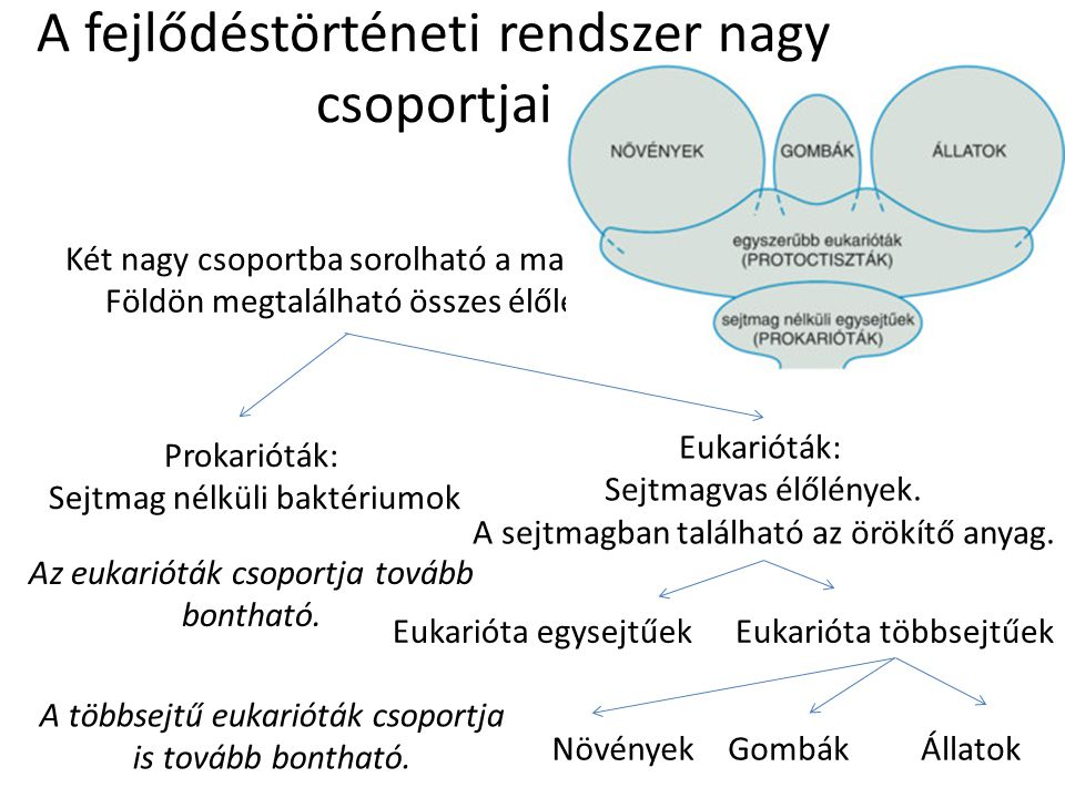 A fejlődéstörténeti rendszer nagy csoportjai