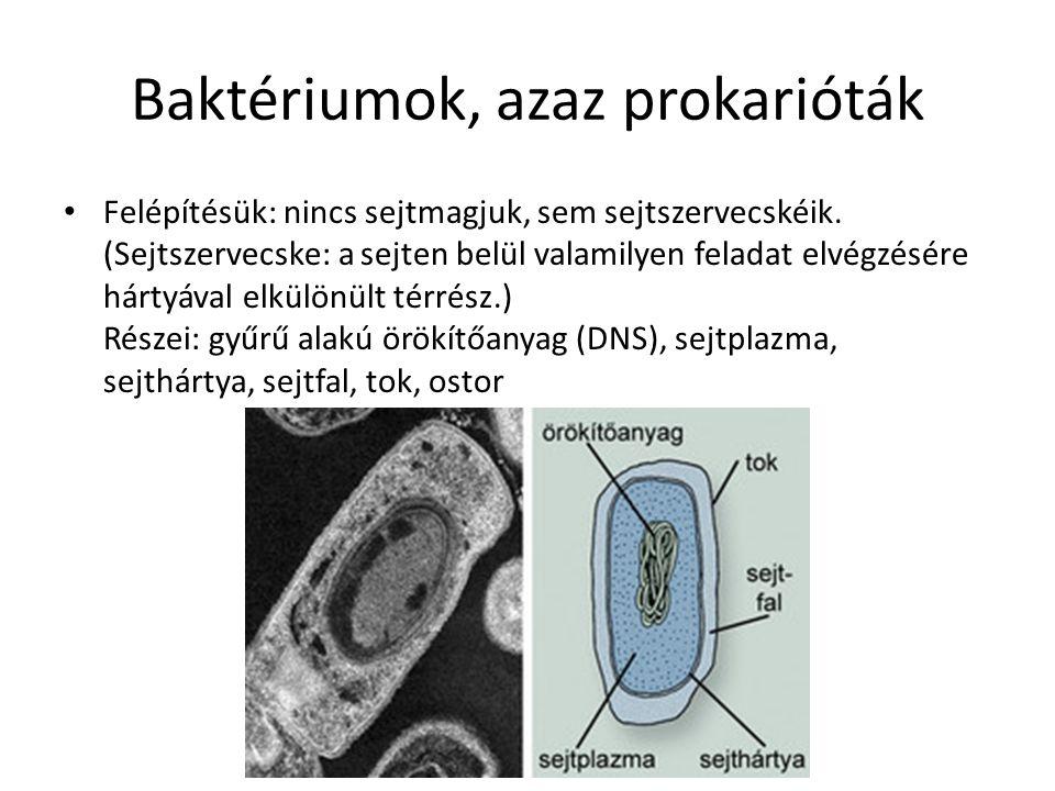 Baktériumok, azaz prokarióták