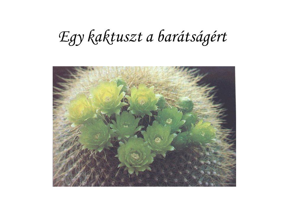 Egy kaktuszt a barátságért