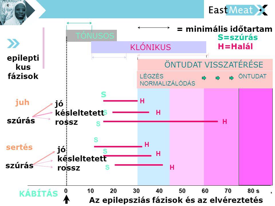 Az epilepsziás fázisok és az elvéreztetés