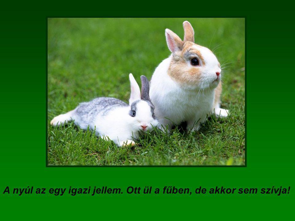A nyúl az egy igazi jellem. Ott ül a fűben, de akkor sem szívja!