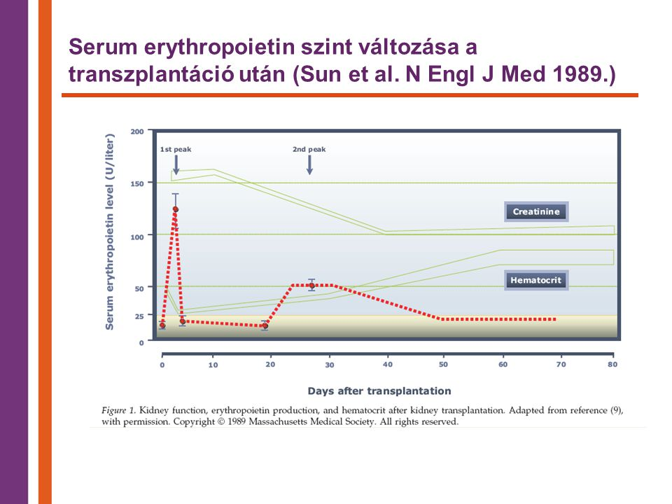 Serum erythropoietin szint változása a transzplantáció után (Sun et al
