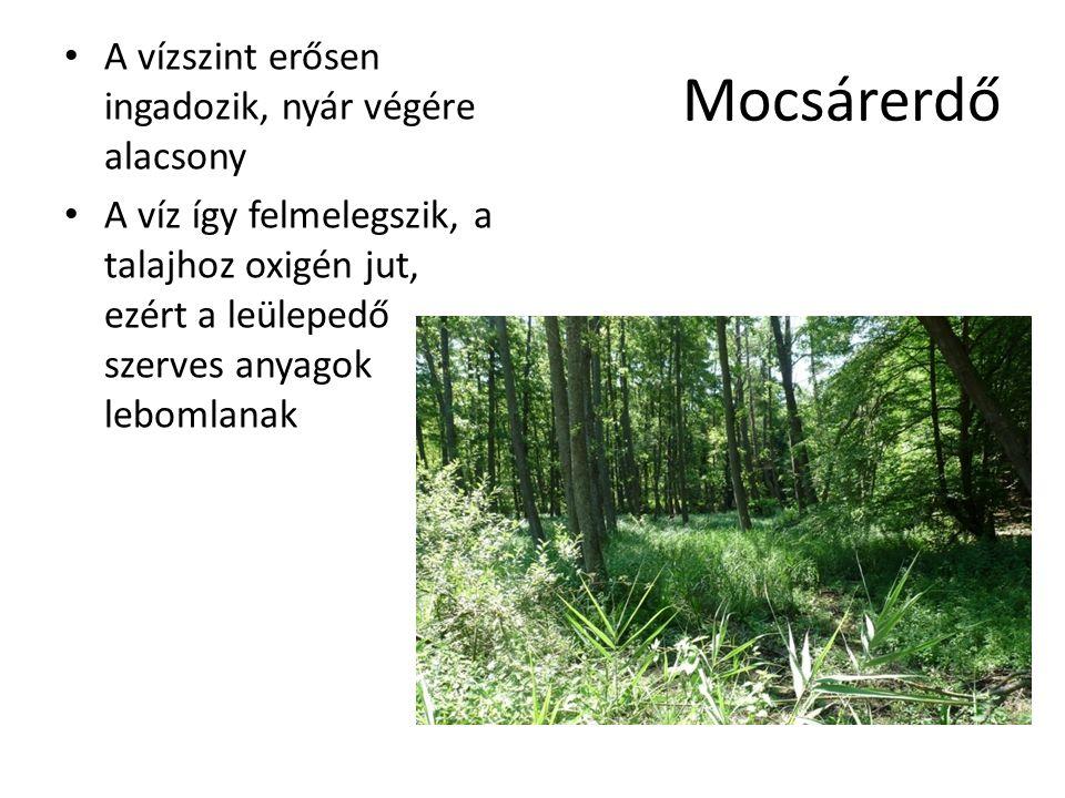 Mocsárerdő A vízszint erősen ingadozik, nyár végére alacsony