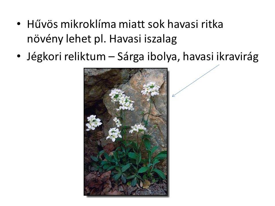Hűvös mikroklíma miatt sok havasi ritka növény lehet pl. Havasi iszalag