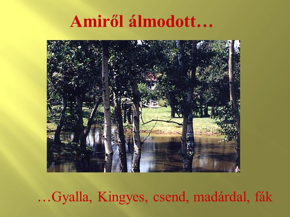 Amiről álmodott… …Gyalla, Kingyes, csend, madárdal, fák