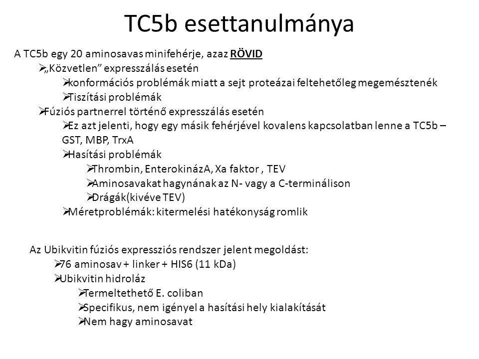 TC5b esettanulmánya A TC5b egy 20 aminosavas minifehérje, azaz RÖVID