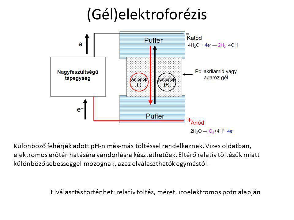 (Gél)elektroforézis