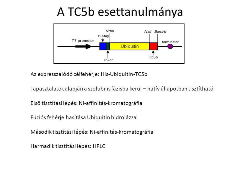 A TC5b esettanulmánya Az expresszálódó célfehérje: His-Ubiquitin-TC5b