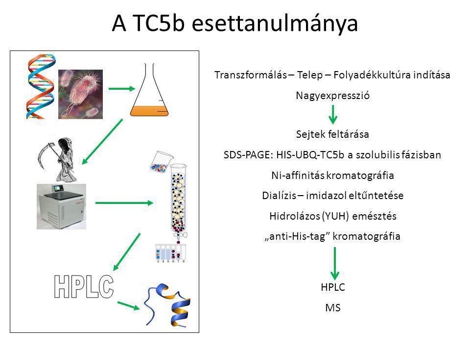 A TC5b esettanulmánya HPLC