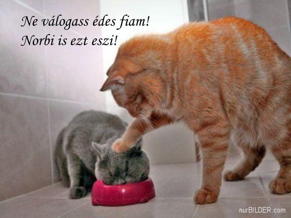 Ne válogass édes fiam! Norbi is ezt eszi!